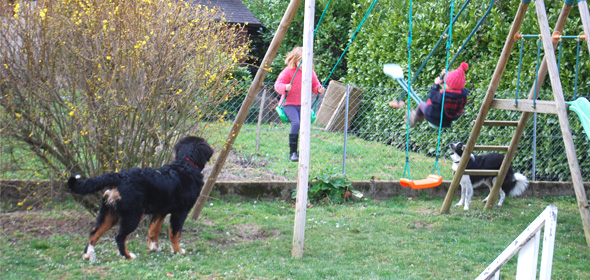 Les chiens sont en totale liberté dans le jardin mais toujours sous notre surveillance.