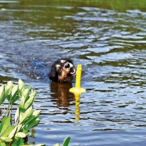 jouet aquatique chien