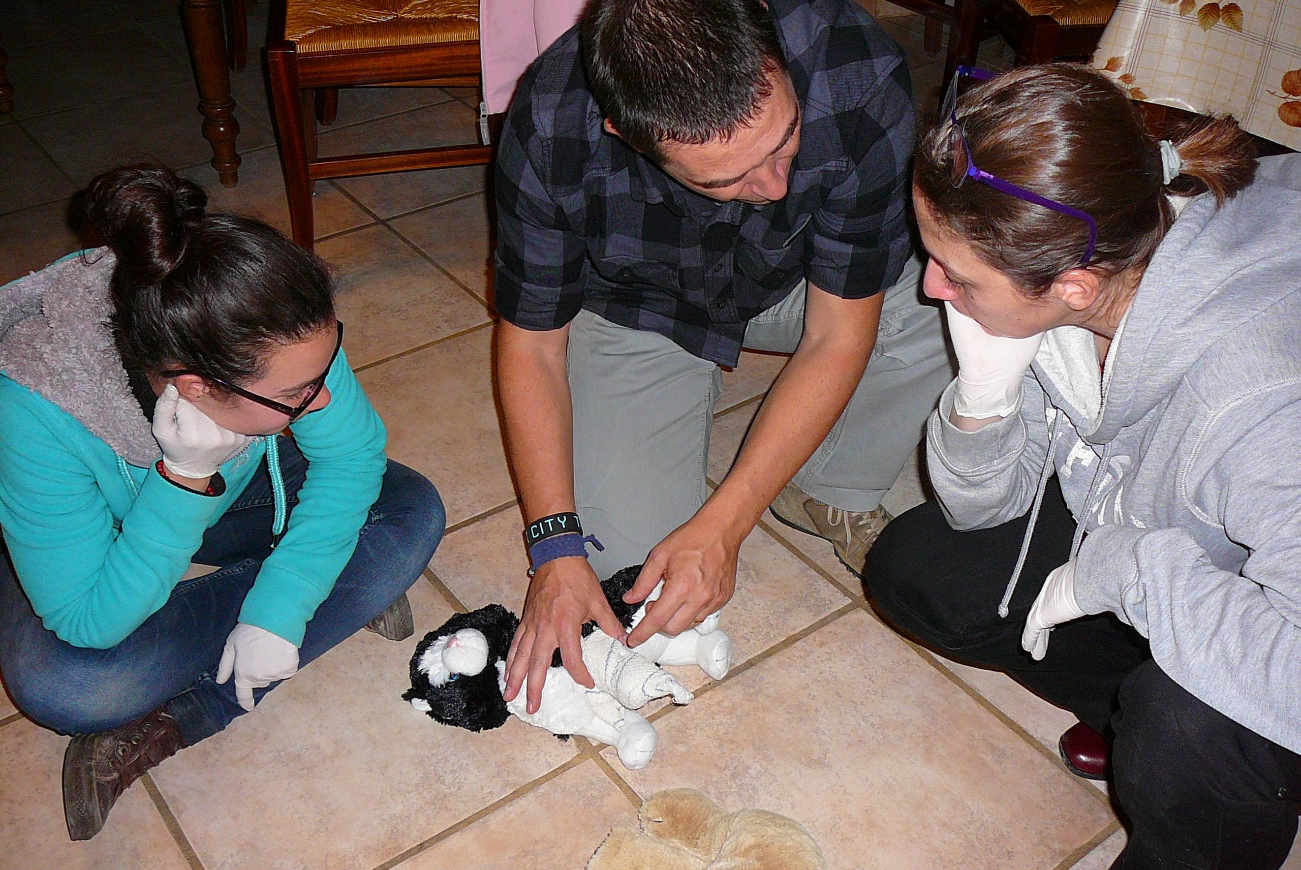Les amis de doudou formation premier secours canins et for Ikea amis et prestations familiales