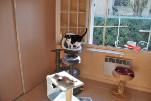 garderie chats les amis de doudou interieur 2